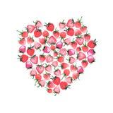 Beau coeur de croquis rouge juteux mûr de main d'aquarelle de fraises Photos stock