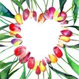 Beau coeur lumineux tendre de croquis violet rose jaune rouge de main d'aquarelle de tulipes Photo stock