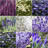 Beau collage de fleurs Image libre de droits