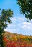 Beau coloré de la forêt tropicale de branc et d'arbre à l'arrière-plan tropical d'été photo stock