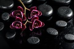 Beau concept de station thermale de fleur foncée d'orchidée de cerise sur le zen noir images libres de droits