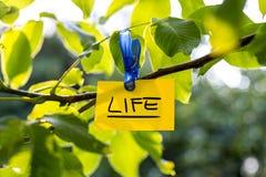 Beau concept vivace de la vie Photo stock