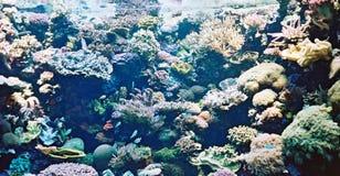 Beau corail photo stock