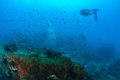 Beau corail en Koh Tao, Thaïlande Photos libres de droits