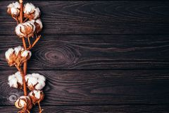 Beau coton sur une table foncée en bois photos libres de droits