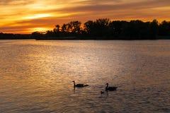 Beau coucher du soleil à la rivière avec des gooses photos libres de droits
