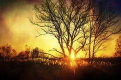 Beau coucher du soleil, arbres dans le pré, paysage contre le soleil Image libre de droits