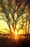 Beau coucher du soleil, arbres dans le pré, paysage contre le soleil Photo stock