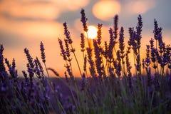 Beau coucher du soleil au-dessus de gisement de lavande à la soirée d'été Photo stock
