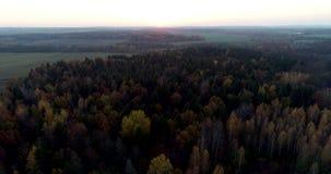Beau coucher du soleil au-dessus de l'antenne de for?t d'automne banque de vidéos
