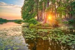Beau coucher du soleil au-dessus de lac de forêt Photos stock