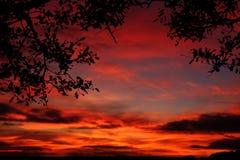 Beau coucher du soleil avec des silhouettes d'arbre Images stock