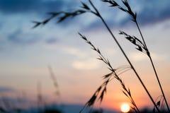 Beau coucher du soleil avec le ciel bleu photo libre de droits