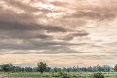 Beau coucher du soleil avec le ciel bleu au-dessus du gisement de riz en Thaïlande Images stock