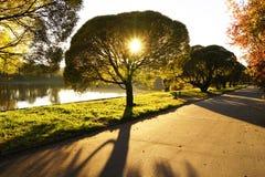 Beau coucher du soleil avec un soleil brillant par la couronne de shpere d'arbre près de l'étang en parc de soirée, Zelenograd, M Image libre de droits