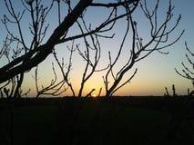 Beau coucher du soleil d'horizontal Photos libres de droits