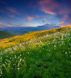 Beau coucher du soleil d'été Photos libres de droits