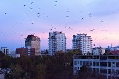 Beau coucher du soleil dans la ville de Chisinau photo stock