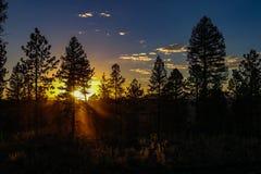 Beau coucher du soleil de ciel foncé derrière des arbres photos libres de droits