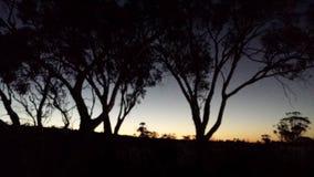 Beau coucher du soleil de soirée d'or jaune et d'argent au-dessus d'une colline avec la silhouette d'arbre Images stock