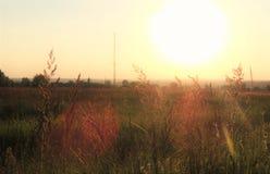 Beau coucher du soleil de soirée sur le paysage herbeux Image stock