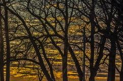 Beau coucher du soleil derrière les arbres nus Photographie stock