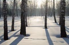 Beau coucher du soleil en parc d'hiver, arbres, neige Photographie stock