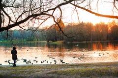 Beau coucher du soleil en parc de ville avec la fille regardant sur l'eau Images libres de droits