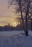 Beau coucher du soleil en stationnement de l'hiver Photo libre de droits
