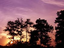 Beau coucher du soleil et silhouette des arbres image stock