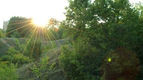 Beau coucher du soleil parmi les arbres verts banque de vidéos