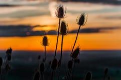 Beau coucher du soleil placé sur une colline Photo stock