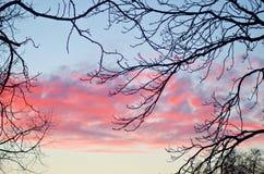 Beau coucher du soleil rose par les branches d'arbre Photographie stock