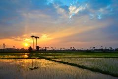 Beau coucher du soleil sur la campagne de gisement de riz Images libres de droits