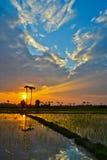 Beau coucher du soleil sur la campagne de gisement de riz Photos stock