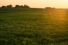 Beau coucher du soleil sur un gisement de ressort image libre de droits