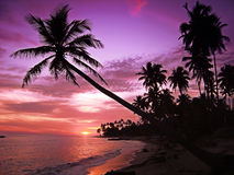 Beau coucher du soleil tropical Photographie stock libre de droits
