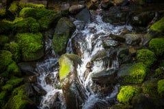 Beau courant dans la forêt tropicale en Sol Duc Valley, Washington Images libres de droits