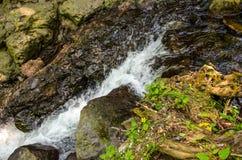 Beau courant de l'eau traversant les roches, l'herbe et les petites fleurs jaunes Image libre de droits
