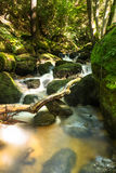 Beau courant de montagne avec Moss Covered Stones Photos stock