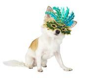 Beau crabot de chiwawa avec le masque lumineux de carnaval image stock