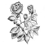 Beau croquis des roses, art handdrawing illustration de vecteur