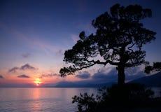 Beau déclin avec une silhouette d'arbre Photographie stock
