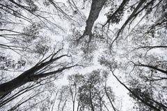 Beau détail de fond monotone tropical de forêt image libre de droits