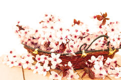 beau détail floral photos libres de droits