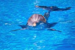 Beau dauphin dans l'eau Photo libre de droits