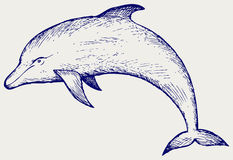Beau dauphin sautant dans l'eau Images stock