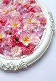 Beau des fleurs roses dans des cadres de vintage Photographie stock
