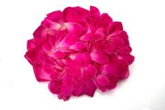 Beau des pétales roses roses d'isolement Photo libre de droits