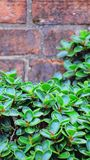 Beau des plantes ornementales vertes Photographie stock